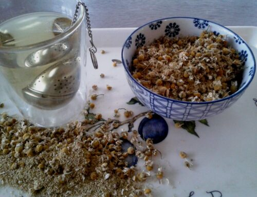 Kamille, grootmoeders favoriete kruid